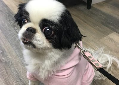 dog in thrift store