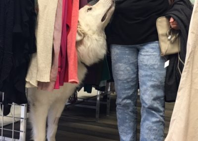 NIce Dog in The Thrift Store
